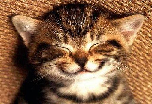 smile (512x352, 49Kb)