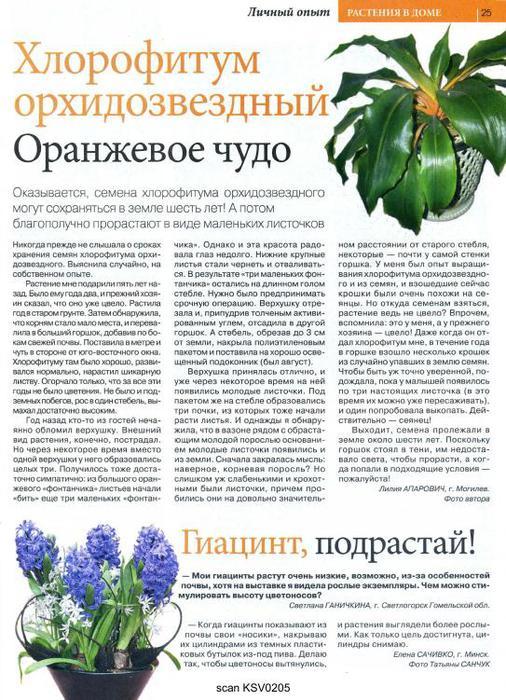Цветок 02 2012_25 (506x700, 96Kb)