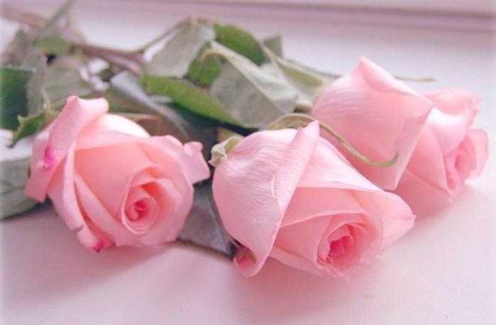 розы (699x458, 44Kb)