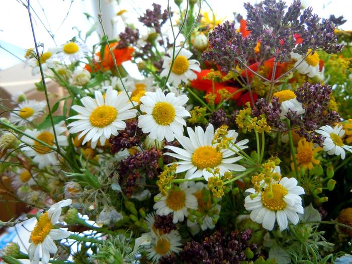 Букеты цветов картинки ромашки 6