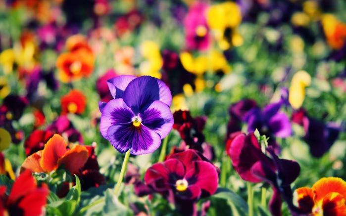 Комнатные цветы для спальни фото 7