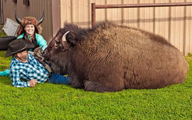 необычные домашние животные фото (670x419, 107Kb)