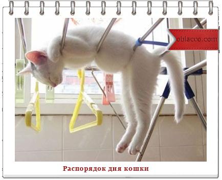 распорядок дня кошки/3518263_rasporyadok (434x352, 182Kb)