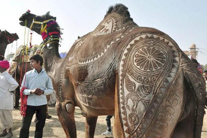 Фигурная стрижка верблюдов 3 (700x466, 106Kb)