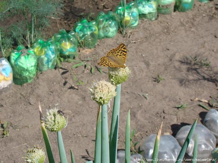 Бабочки2 (700x525, 246Kb)
