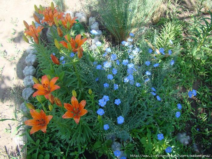 Голубое и оранжевое (700x525, 426Kb)