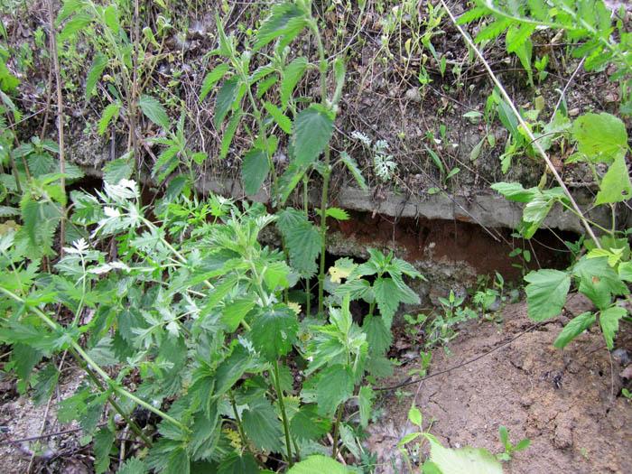 Старая Рязань развалины (700x525, 177Kb)