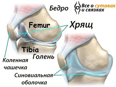sinovit-kolena (400x300, 63Kb)