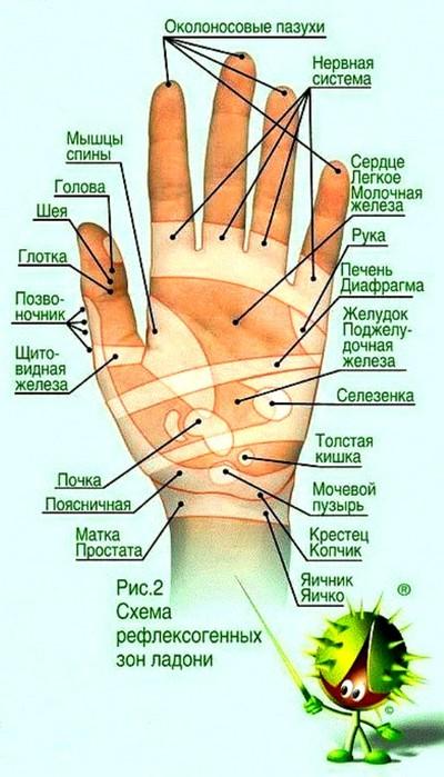 Рука (400x700, 83Kb)