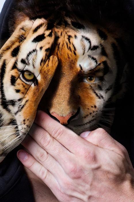 фотопроект Лица диких зверей 7 (466x700, 354Kb)