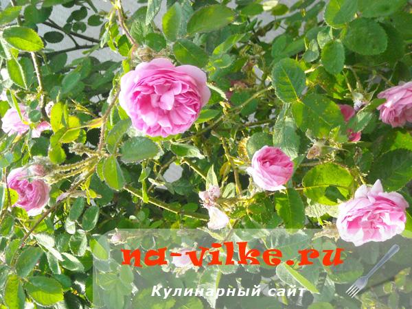 3554158_varenieizrosi1thumb (600x450, 190Kb)