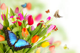 цветы (275x183, 12Kb)