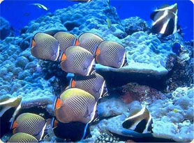 5640974_maldives_ribki (278x206, 52Kb)