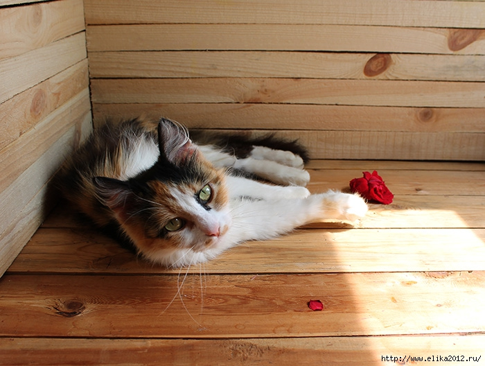 кошка лежит на столе/4800487_13 (700x528, 246Kb)