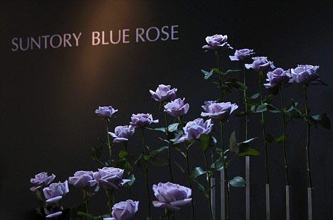 1256190726_blue-rose-04 (468x310, 107Kb)