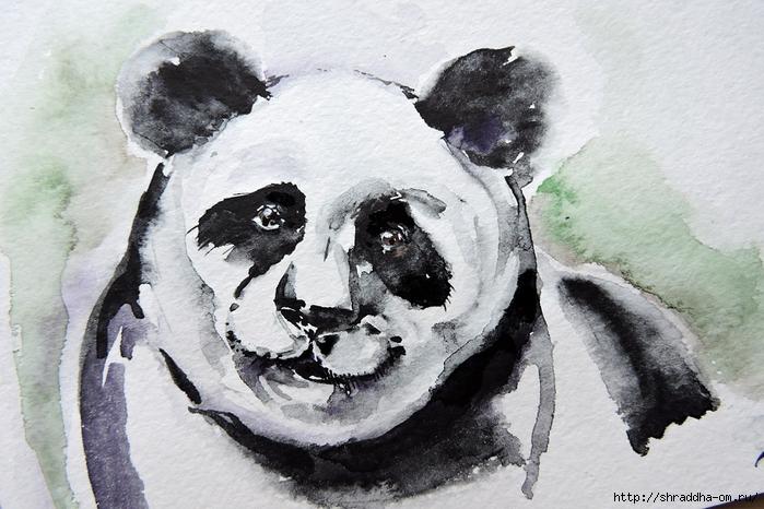 панда, акварель от Shraddha (1) (700x466, 277Kb)