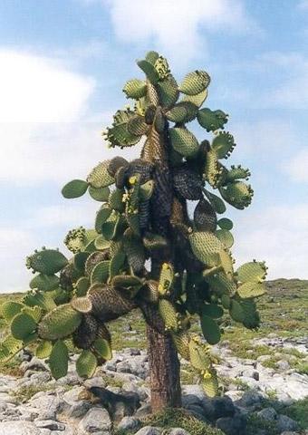 kaktus3 (340x480, 58Kb)