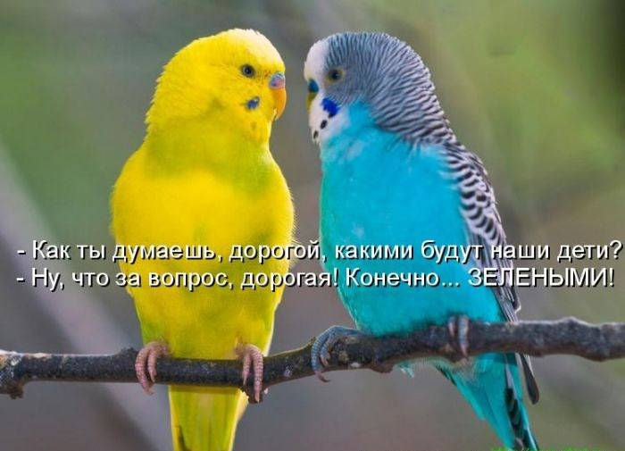 1309463866_1309111160_1308900888_kotomatrix_22 (700x505, 249Kb)