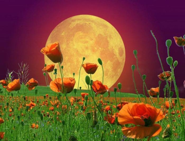 Луна цветы