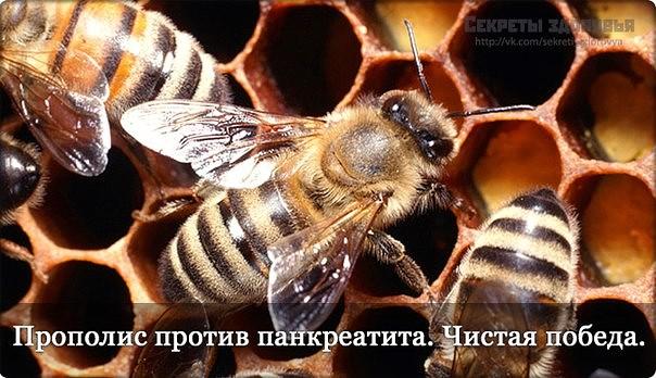4121583_psroraoor (604x348, 76Kb)