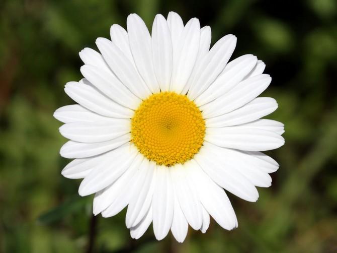 White_Flower_3970_1600_1200 (670x502, 64Kb)