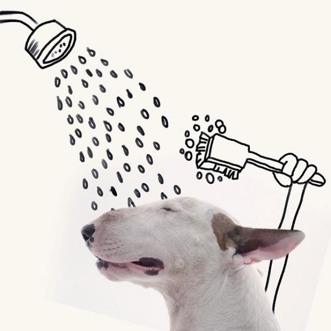 18193760-R3L8T8D-650-Jimmy-the-Bull-Terrier20__605 (650x650, 85Kb)