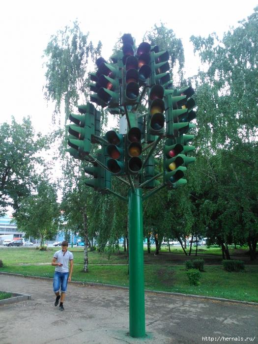 светофорное дерево в Пензе/4555640_DSC_2820 (525x700, 364Kb)