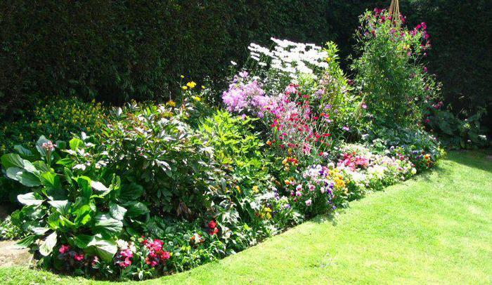 Красивые цветники в саду фото