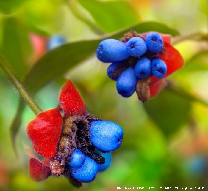цветы псих (700x643, 260Kb)