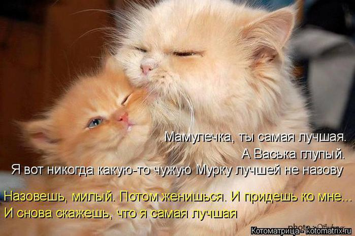 4465417_kotomatrica (700x465, 58Kb)