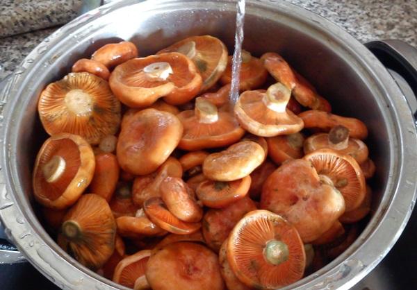 Консервирование рыжиков в домашних условиях рецепты