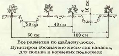 75-;O=8-0 AE5-0 --A04-8[10] (500x235, 82Kb)