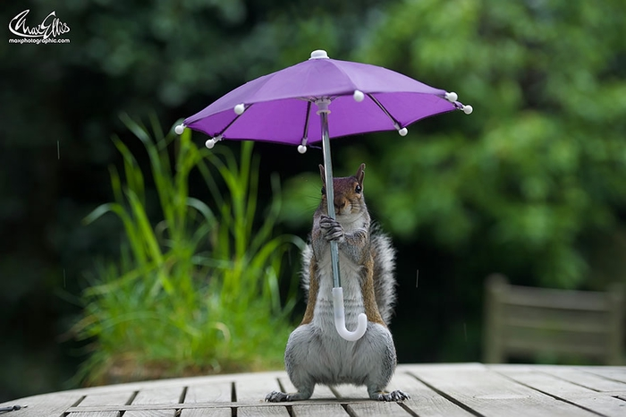 1-squirrel-umbrella-rain-squirrelisimo-max-ellis-5 (700x466, 178Kb)