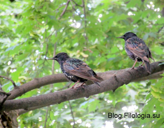 Две птицы на ветке (700x548, 63Kb)