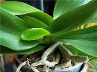Орхидея2 (200x150, 11Kb)