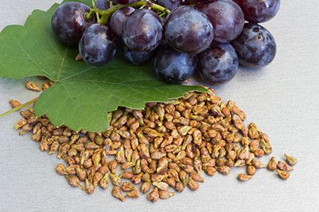 виноградные (450x300, 139Kb)