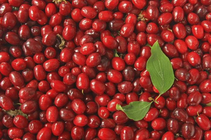 ягоды кизила польза 1 (700x466, 507Kb)