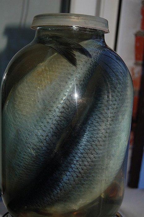 Рыба быстрого посола в домашних условиях