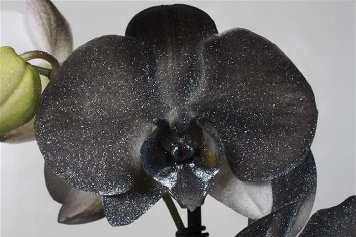 ch.orkhideia (700x465, 219Kb)