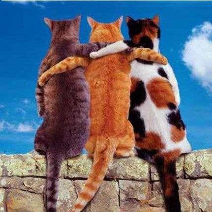 коты (431x430, 158Kb)