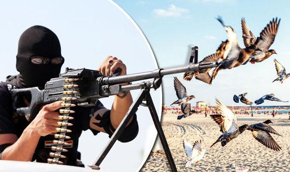 Islamic-State-pigeons-582366 (590x350, 55Kb)