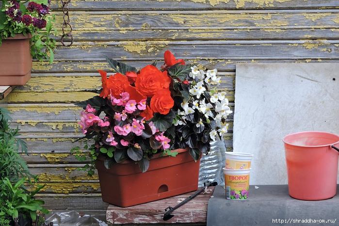 цветочки (1) (700x466, 340Kb)