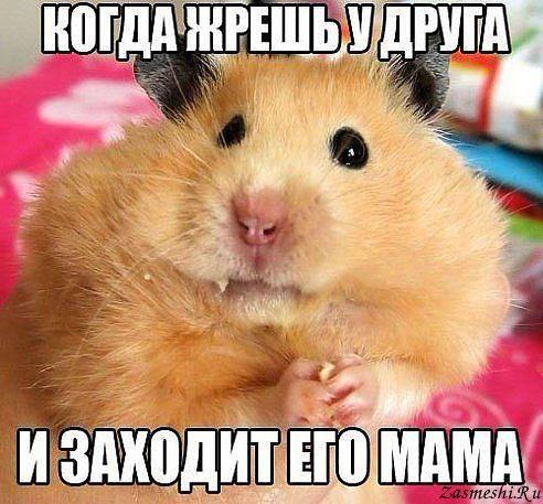 5680197_774Podlovili (492x457, 53Kb)