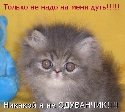 Не надо на меня дуть! (488x436, 148Kb)