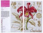 Превью Orhideya-2 (700x524, 449Kb)