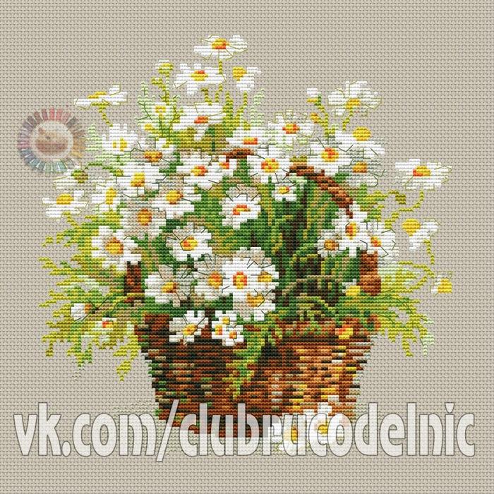 Russian Daisies (700x700, 279Kb)