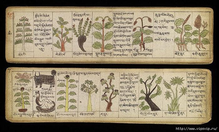5745884_tibetskaya_medicina (700x423, 275Kb)