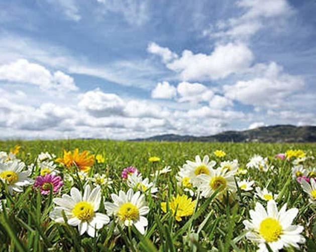 flower-vally-3 (629x503, 47Kb)