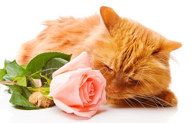 090406_muscat_smells_rose_1063 (650x417, 131Kb)