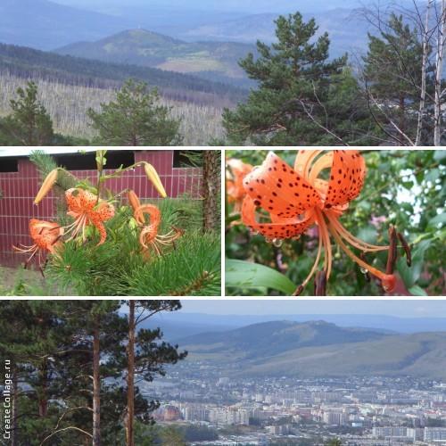 129059398_kollazh_zabaykalskie_saranki (500x500, 300Kb)
